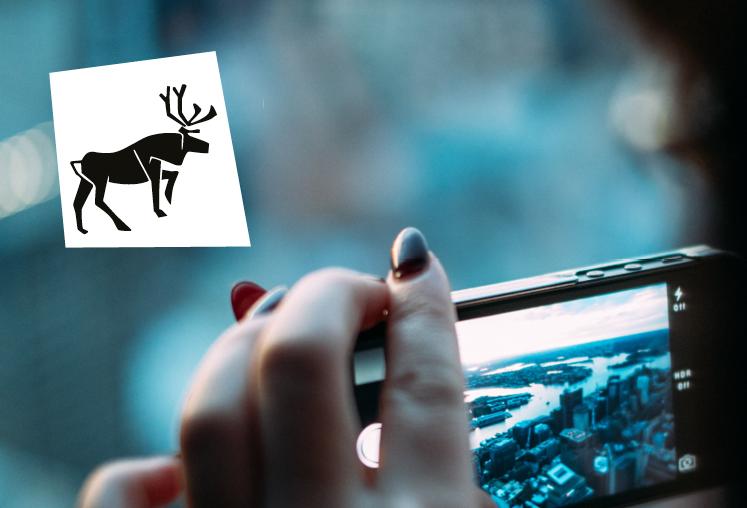 Caribou Digital - Branding